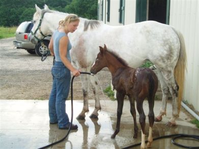 Training   Synergy Equine