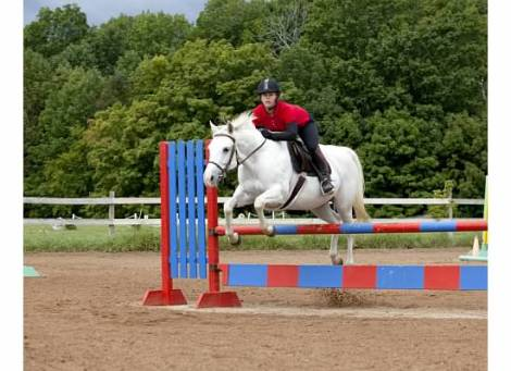 Leanne Albers | Synergy Equine